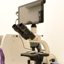 顕微鏡 写真
